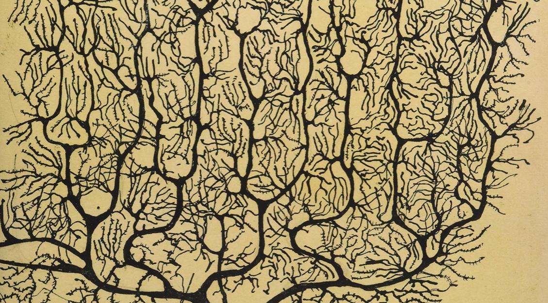 <i>The Creative Polymath:</i> <br/>By Edward de Bono</br>